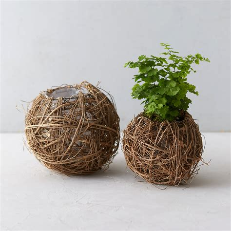 Wicker Kitchen Furniture by Vine Kokedama Pot Terrain