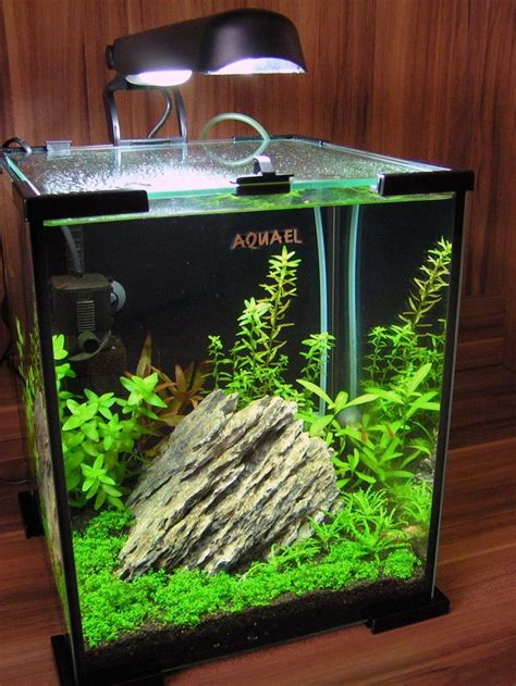 shrimp tank aquascape 1000 images about aquascape on pinterest aquarium