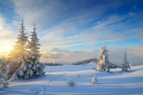 winter snow sun trees stock photo nature stock photo