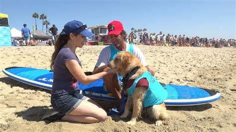 golden retriever rescue pensacola this golden retriever was homeless until he learned how to surf wjla