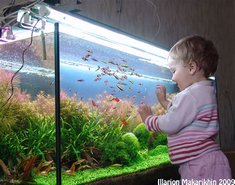 aquascape forum aquascape of the month january 2010 quot passage to the red forest quot aquascaping world forum