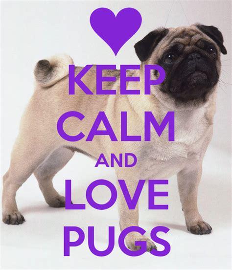 purple pug image gallery purple pug