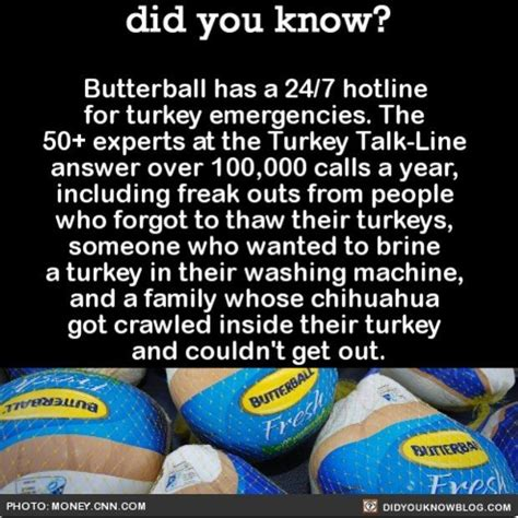 crazy thanksgiving facts 236 best images about did you know on pinterest