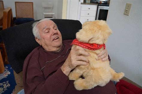 comfort pets law solution to emotional support animal debate comfort