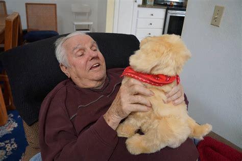 comfort pet law solution to emotional support animal debate comfort