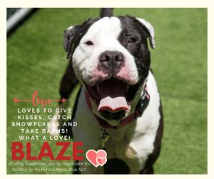 loves  give kisses catch snowflakes   baths whatalove blaze   years