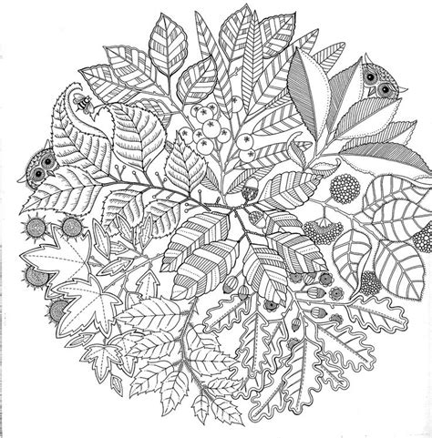 secret garden coloring book secret garden colouring book to alleviate stress