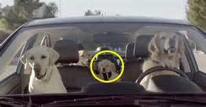 Subaru Commercial Dogs New Subaru Tv Commercial Dogs Autos Post