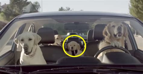 industrial puppy in subaru commercial subaru commercial song 2014 autos post subaru crosstrek tv