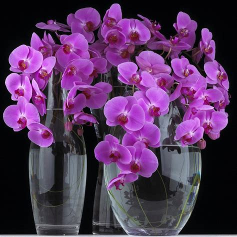 Phalaenopsis Orchid Centerpiece Planning Our 17 Best Images About Centerpieces On