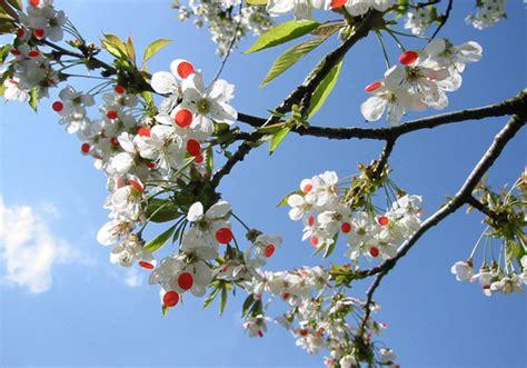cherry tree s11 9fu re to
