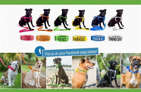 how to a deaf not to bite colourful system in collars lead leash mesh vest non pull harness
