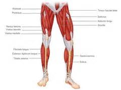 chapter 10 the muscular system flashcards quizlet