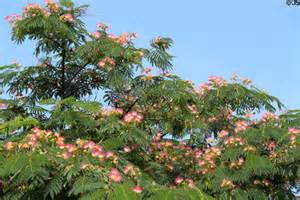 Picture Of Flowering Trees - flowering tree in cherokee lemp historic district st
