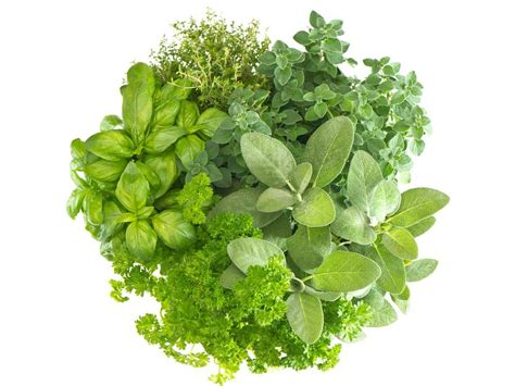 meaning  symbolism   word herbs