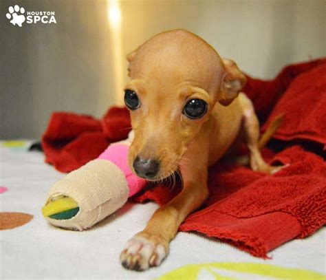 houston spca dogs houston spca shares cutest saddest looking photo houston chronicle