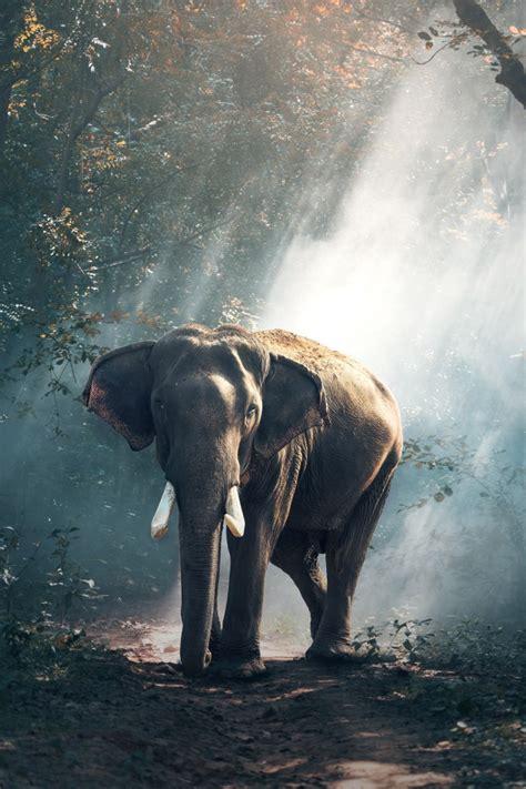 wallpaper elephant mammal reserve hd  animals
