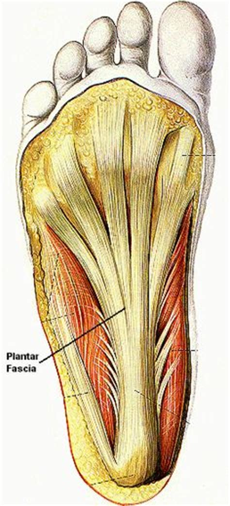 Planters Factitious foot and plantar fasciitis on