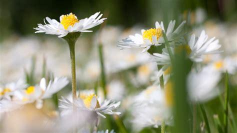 fiori commestibili elenco fiori eduli l elenco dei fiori commestibili puoi
