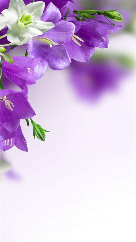 purple flowers backgrounds wallpapers cave desktop background
