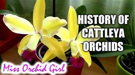 Cattleya Maxy history of cattleya orchids