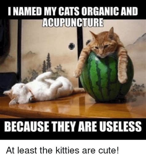 Acupuncture Meme - 25 best memes about cats and kitties cats and kitties memes