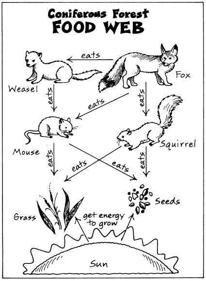 coloring pages of food webs food web coloring pages food chain coloring pages