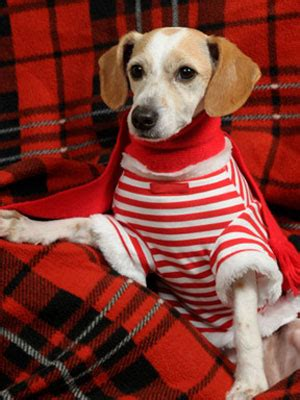 Www Womansday Com Giveaways - christmas pet photo contest at womansday com giveaways