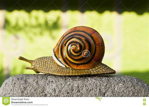 imagenes animales que reptan el caracol solo se arrastra a lo largo del camino del