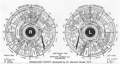 Iridology Detox by Iridology Chart Detox Net Au