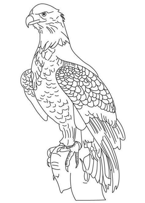 bald eagle coloring pages free bald eagle coloring pages for kids printable