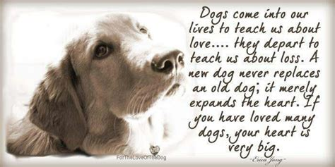 inspirational quotes  dogs death quotesgram