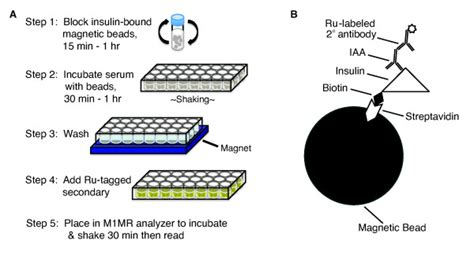 streptavidin protocol protocol for murine iaa ecl assay a overview of the