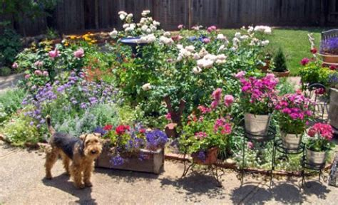 dog friendly backyard ground cover 1000 images about pet plantings on pinterest
