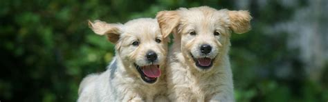 top 28 pet shops in arkansas pet shops in jalandhar