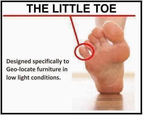 Toe Memes - even the little toe has a purpose funny