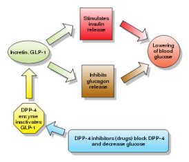 Dpp 4 Inhibitors Also Search For We Ll Answer All The Acid Reflux Questions You Might Healthguideweb Net