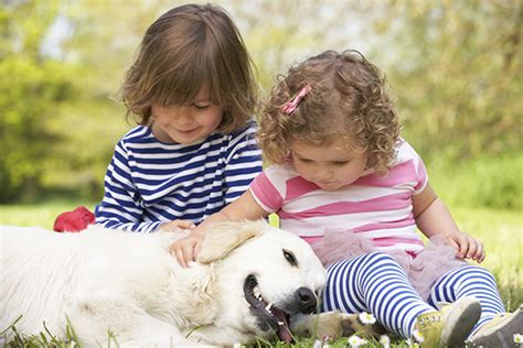 golden retriever and children 24ze pet education a bologna nell asilo nido entra boris un golden