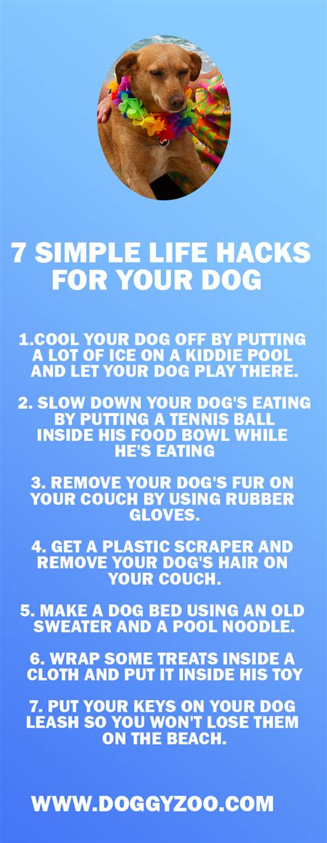 simple life hack how to ask for what you need spiral up seven life hacks for your dogs doggyzoo comdoggyzoo com