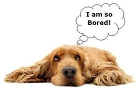 do dogs get bored do animals get bored animalkind vet clinic