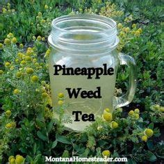 Thc Detox Tea Recipe by Velvetleaf Has Edible Seeds Read More On This Awesome