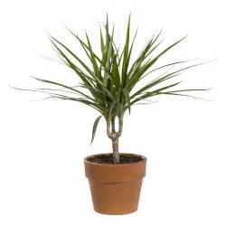 plantes vertes plantes et fleurs d int 233 rieur et