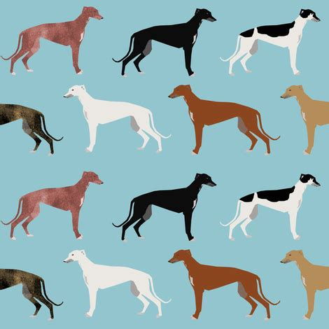 greyhound colors greyhounds fabric breed coats colors fabric
