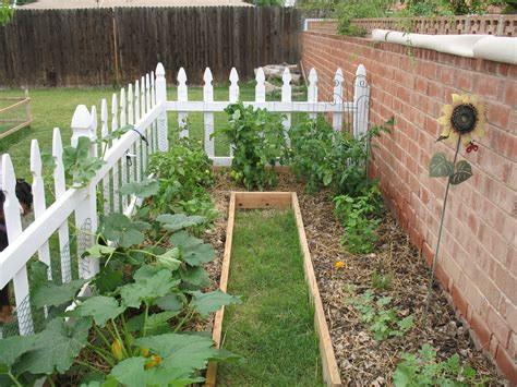 how to make a backyard garden arizonans look to save on their food budget by starting