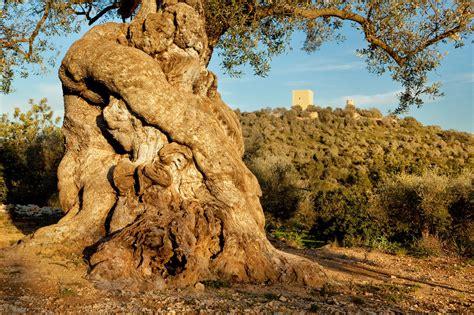 imagenes de paisajes culturales narrando los paisajes culturales espa 241 oles hoyesarte