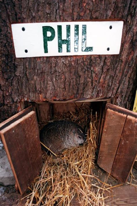 groundhog day house punxsutawney phil emerges and predicts early inklings