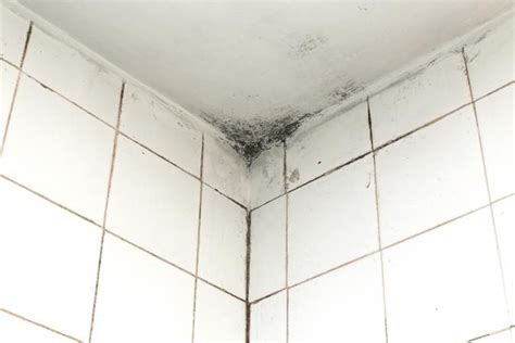 Cleaning Mildew From Bathroom Ceiling by 25 Best Ideas About Bathroom Ceilings On Diy