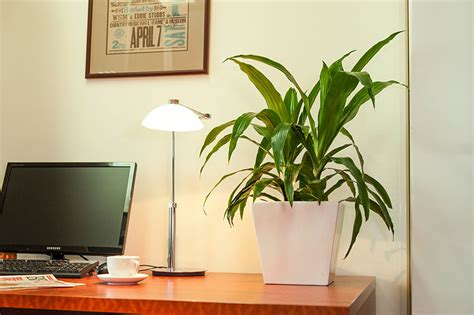 office desk plant want to stay fresh even working hard at office keep your office green cool blog