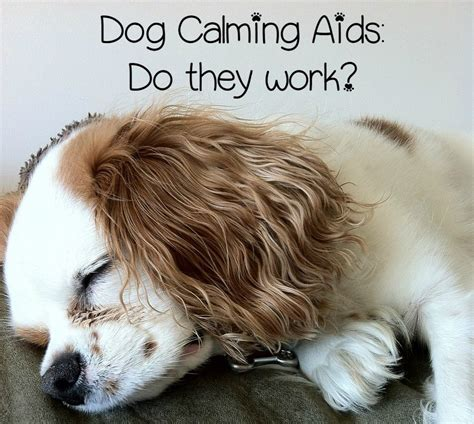 calming aid for dogs calming aids questions and answers dogvills