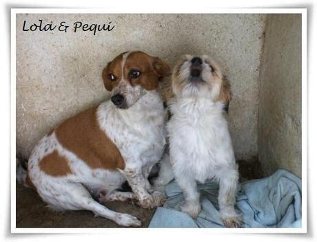 hunde mit handicap suchen ein zuhause hunde der finca lucendum suchen ein liebevolles zuhause